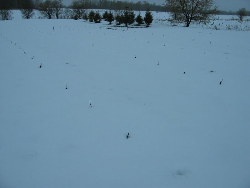 Neige, 27 avril 2010