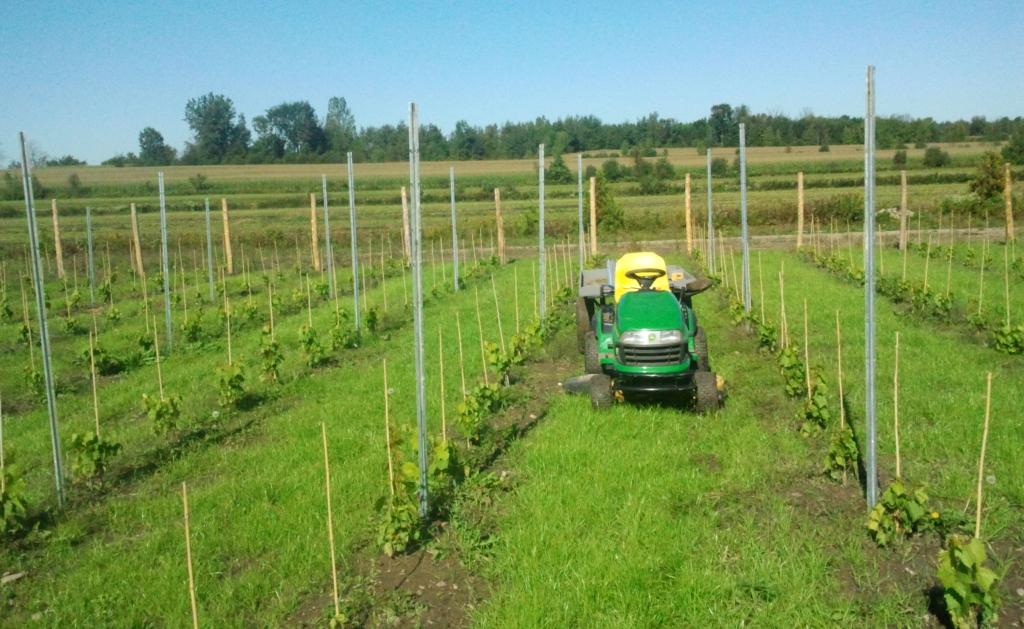 Pré-plantation des poteaux de rangée