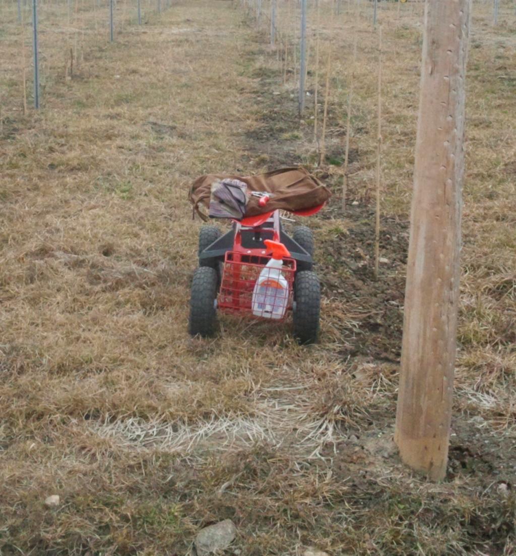 La taille 1 an : l'équipement (chariot, sécateur, désinfectant)