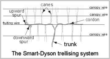 Smart-Dyson